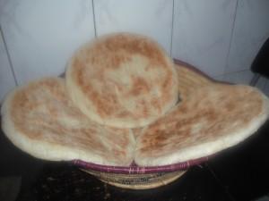 brood 16