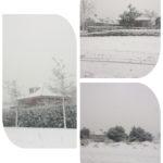 Sneeuw-Wit !
